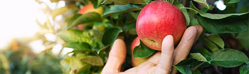 Výkup jablek od 28. 9. 2021